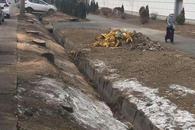 Дело о вырубке краснокнижных деревьев у магазина Sulpak поступило в суд в Алматы