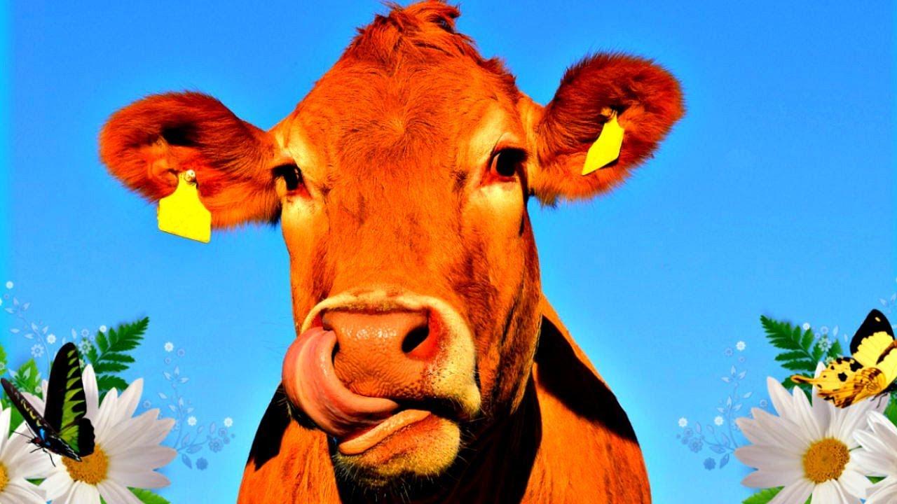 Показательная история одного контракта на приобретение скота по-казахстански