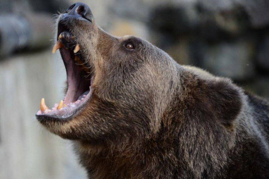 В Восточном Казахстане сельчанина осудили за незаконную охоту на медведя