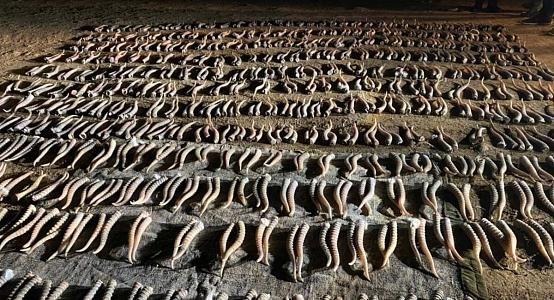 Рога сайги на сумму около Т2 млрд изъяли в ЗКО