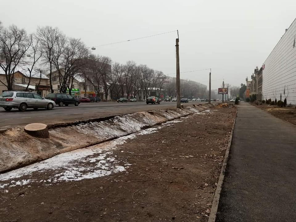 Дело о спиленных деревьях возле Sulpak в Алматы: прокурор запросил четыре года ограничения свободы для дизайнера
