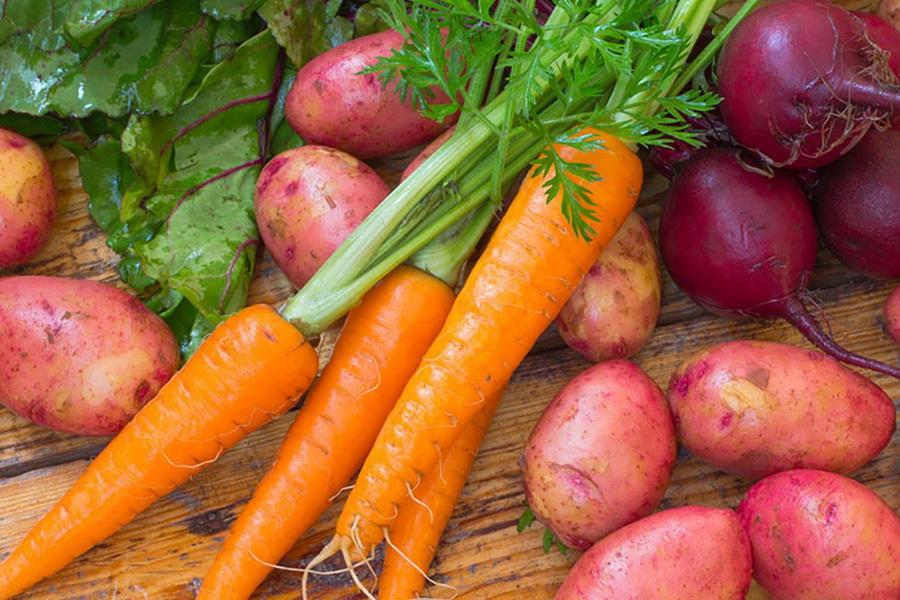 Казахстан предотвратил ввоз опасных семян картофеля и моркови