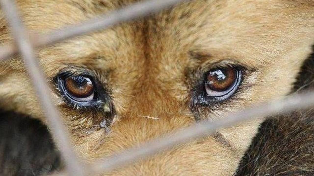 За жестокое обращение с животными можно будет получить реальный срок — проект закона