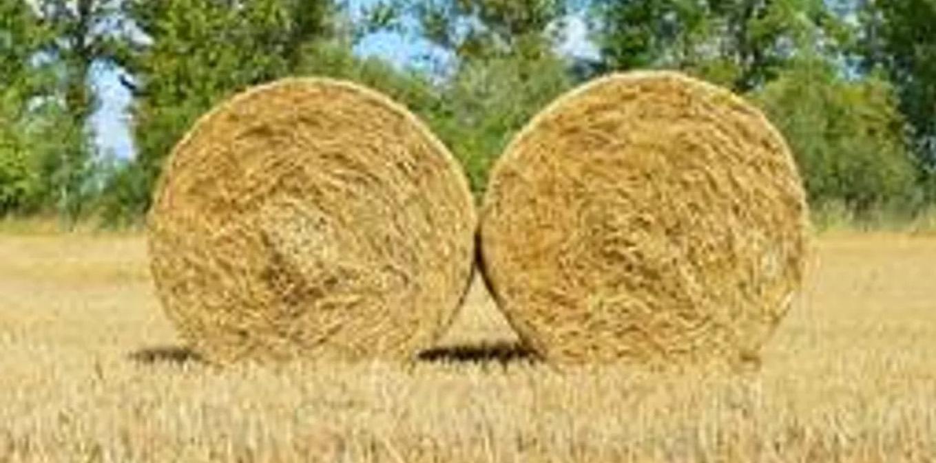 Мошенник продал несуществующий корм для скота жительнице СКО